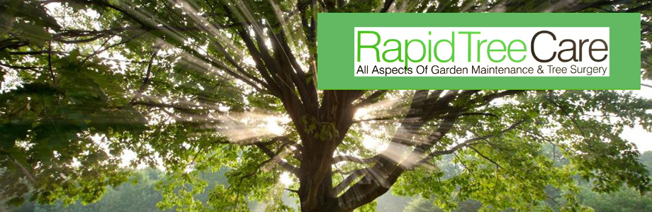rapid-tree-care-felling-liverpool